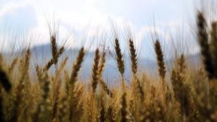 Konya büyüklüğünde tarım arazisi yok oldu