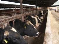 Hayvancılık sektörü Konya'da buluşacak