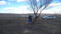 Cihanbeyli'de Ağaçlar Budanıyor