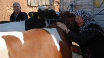 Telef olan inekleri için ağlayan çifti güldüren hediye