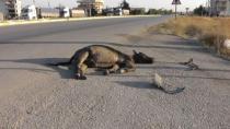 Kulu'da Başıboş Eşek Kazaya Sebep Oldu
